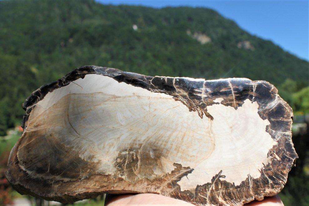 Petrified Wood - 250 Mio. Jahre alt